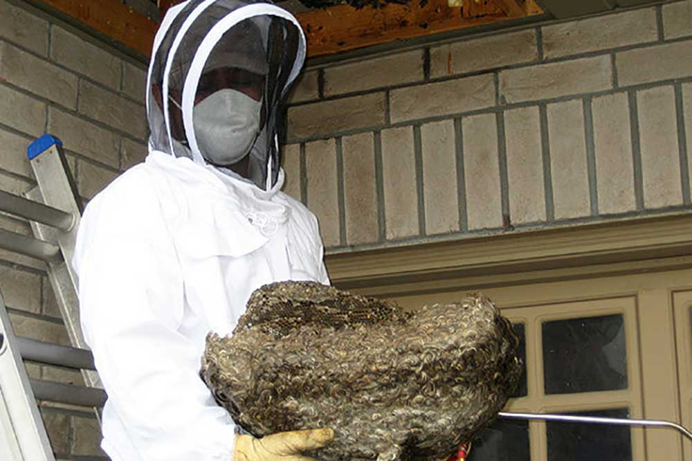 Hamptons Pest Control wasp nest